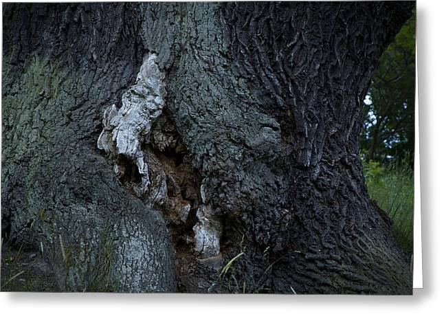 Sleeping Tree Spirit - Available For Licensing Greeting Card by Ulrich Kunst And Bettina Scheidulin