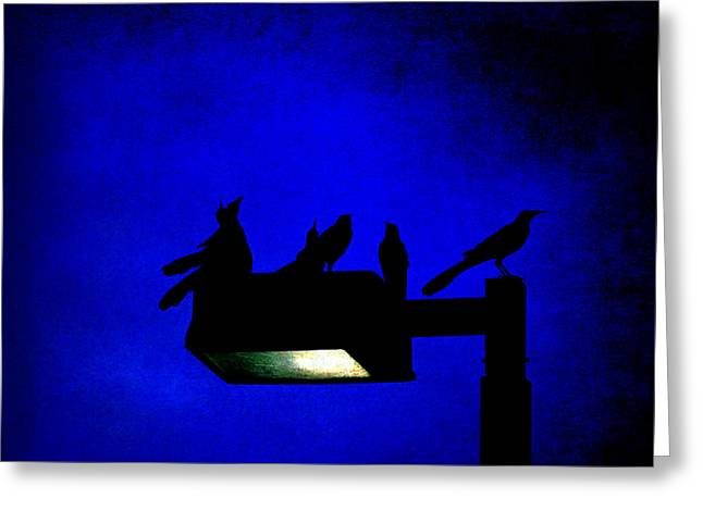 Sleepless At Midnight Greeting Card by Trish Mistric