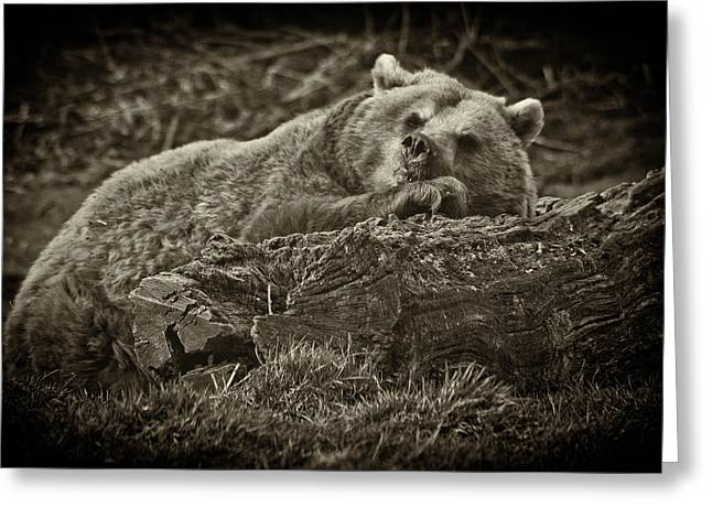 Sleepy Bear Greeting Card by Chris Boulton