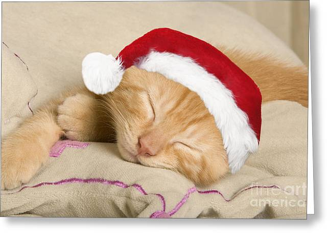 Sleepy Christmas Kitten Greeting Card