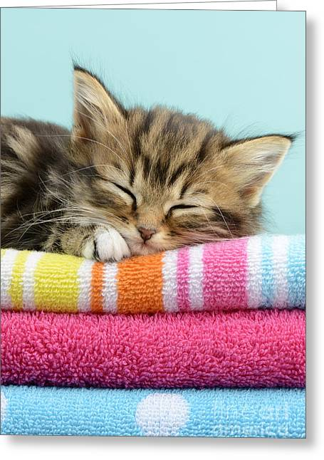 Sleepy Kitten Greeting Card by Greg Cuddiford