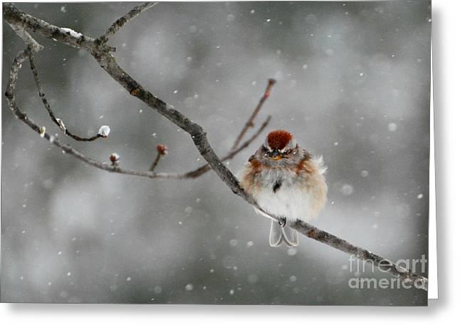 Sleepy Little Sparrow Greeting Card