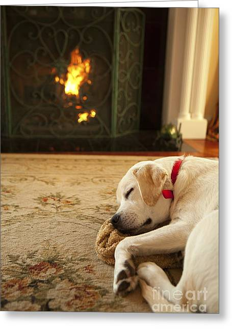 Sleepy Puppy Greeting Card by Diane Diederich