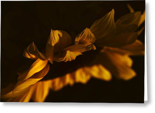 Sleepy Sunflower Greeting Card by The Forests Edge Photography - Diane Sandoval