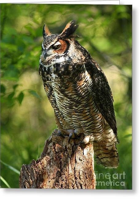 Sleepy Time In The Forest Great Horned Owl  Greeting Card by Inspired Nature Photography Fine Art Photography