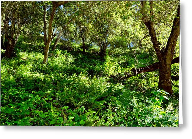 Greeting Card featuring the photograph Sleepy Valley Oaks by Gary Brandes