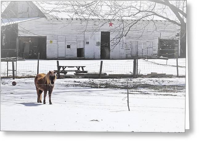 Sleet Aplenty On The Farm Greeting Card