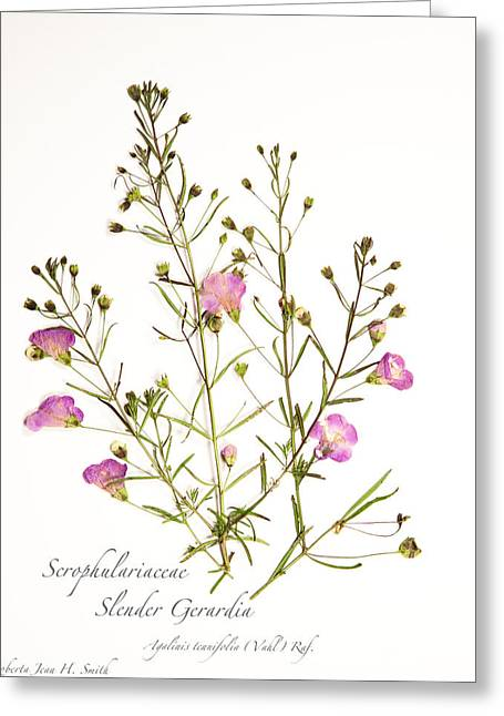 Slender Gerardia 3 Greeting Card