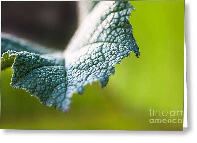 Slice Of Leaf Greeting Card