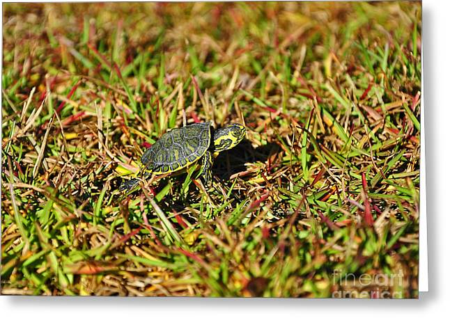 Slider To Go Greeting Card by Al Powell Photography USA