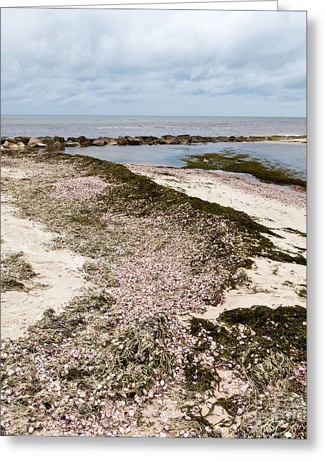 Slipper Shells By The Shore Greeting Card by Michelle Wiarda