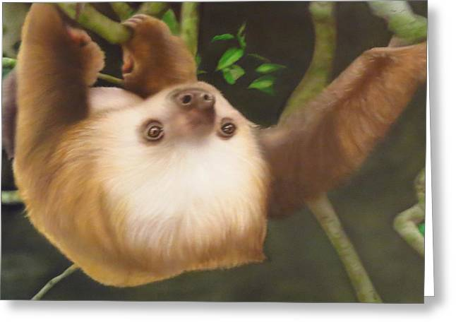 Sloth In A Tree Greeting Card by Peter Hartog