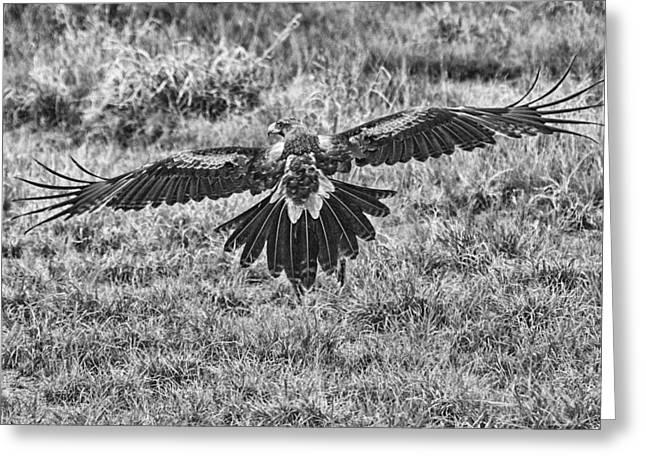 Slow Speed Take-off Greeting Card by Douglas Barnard
