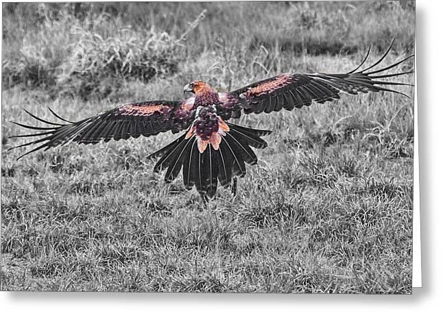 Slow Speed Take-off V2 Greeting Card by Douglas Barnard