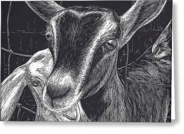 Slow Turtle Farm Goats Greeting Card by Jennifer Harper