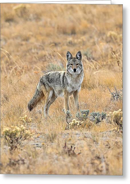 Sly Dog Greeting Card by Keith R Crowley