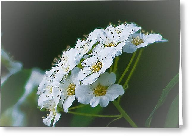 Small Beauty Greeting Card by Joe Scott
