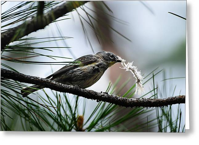 Small Bird Greeting Card
