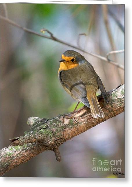 Small Bird Robin Greeting Card by Jivko Nakev