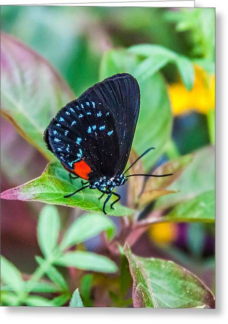 Small Black With Blue Spots Greeting Card by Karen Stephenson