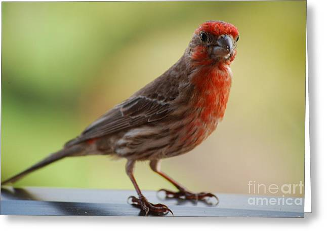 Small Brown And Red Bird Greeting Card by DejaVu Designs