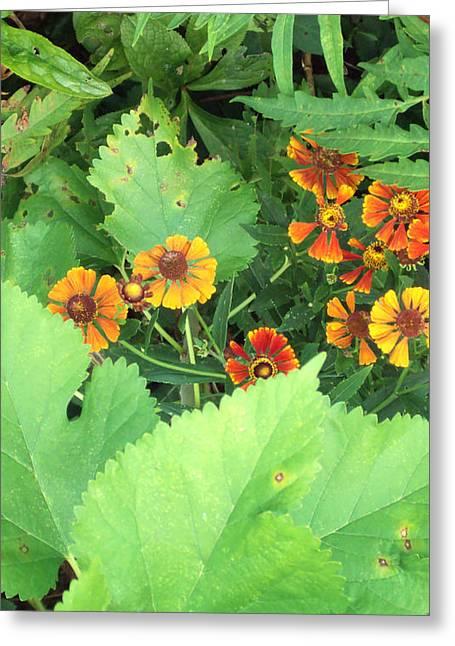 Small Flowers Greeting Card by Cynthia Harvey