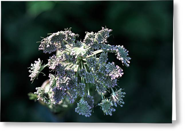 Greeting Card featuring the photograph Small Flowers Makes One Big by Leif Sohlman