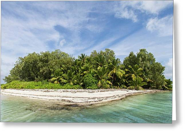 Small Palm-covered Island Greeting Card by Peter Chadwick