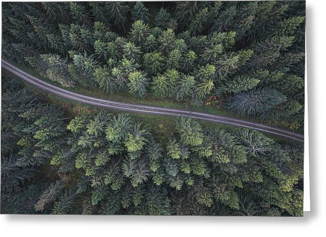 Small Road Through The Forest Greeting Card