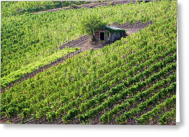 Small Rock Shed In The Vineyards Greeting Card by Terry Eggers