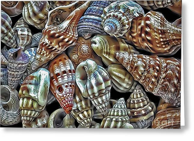 Small Sea Shell Collection Greeting Card