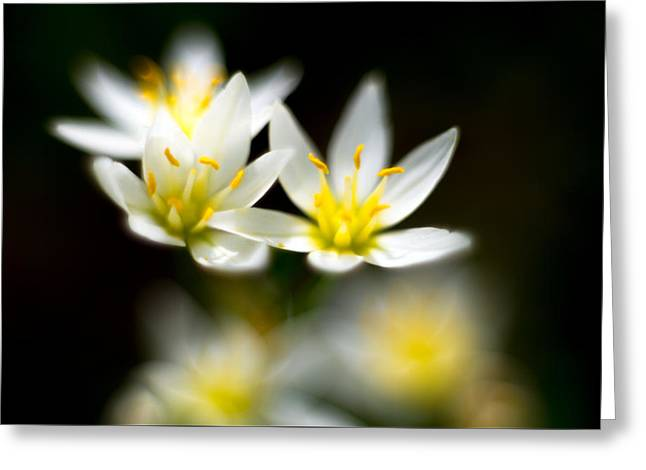 Small White Flowers Greeting Card by Darryl Dalton