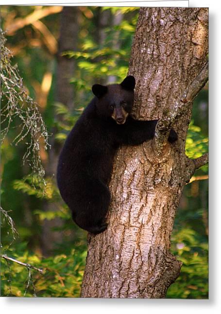 Smile Bear Cub Greeting Card by Deshagen Photography