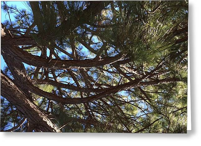 Smiling Branches Greeting Card