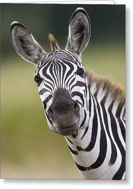 Greeting Card featuring the photograph Smiling Burchells Zebra by Suzi Eszterhas