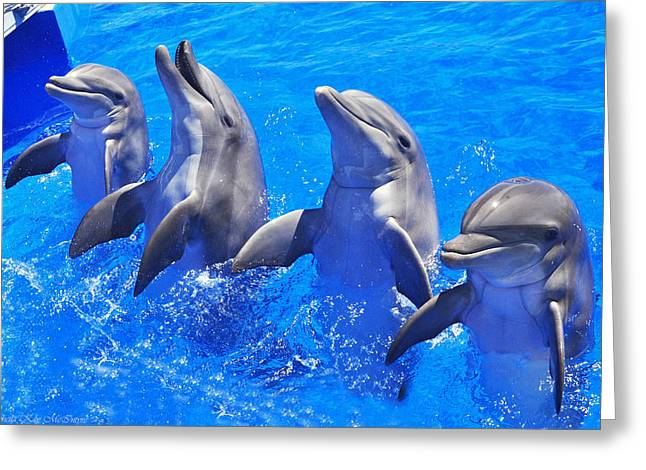 Smiling Dolphins Greeting Card