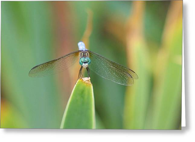 Smiling Dragonfly Greeting Card