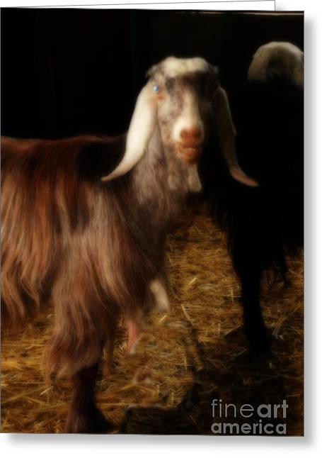 Smiling Egyptian Goat Greeting Card by Doc Braham