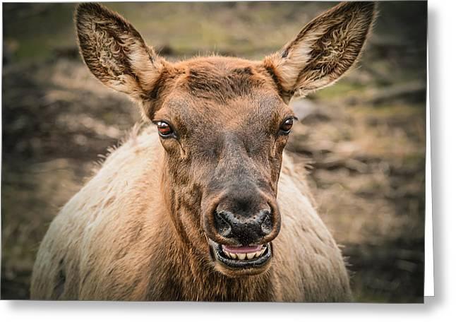 Smiling Elk Greeting Card by LeeAnn McLaneGoetz McLaneGoetzStudioLLCcom