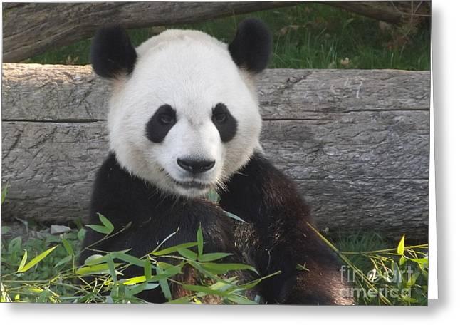 Smiling Giant Panda Greeting Card