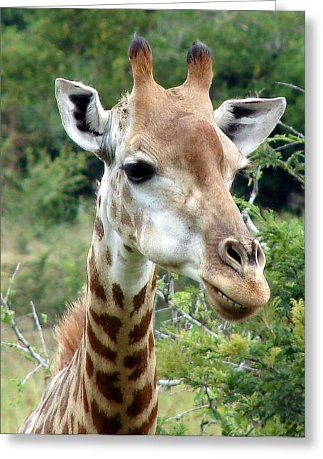Smiling Giraffe Greeting Card by Ramona Johnston