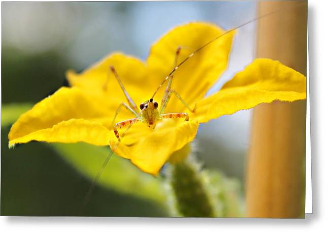Greeting Card featuring the photograph Smiling Katydid by Candice Trimble