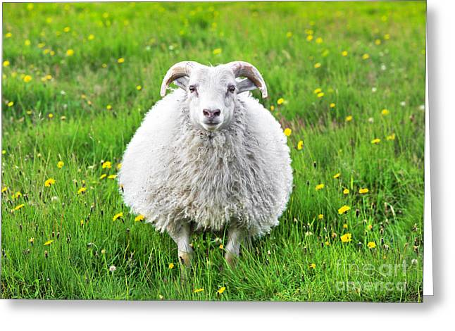 Smiling Sheep Greeting Card by JR Photography