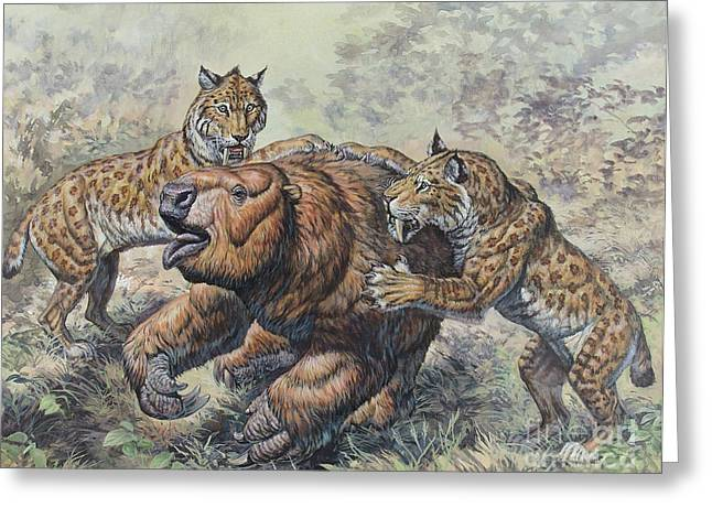 Smilodon Dirk-toothed Cats Attacking Greeting Card by Mark Hallett