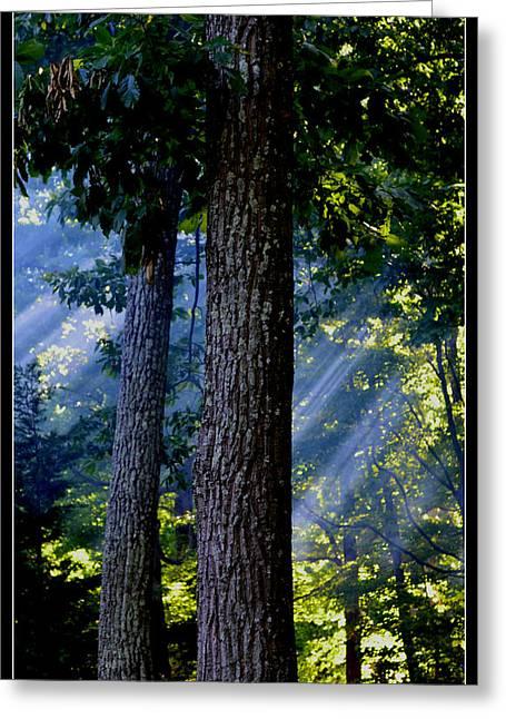 Smoke Through The Trees Greeting Card