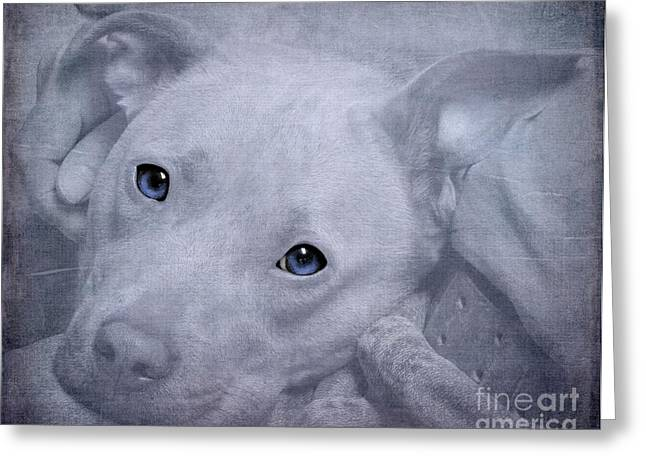 Smokey Blue Greeting Card by Renee Trenholm
