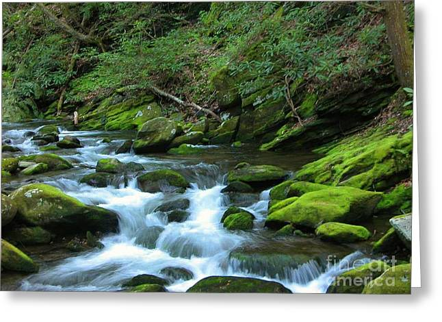 Smokey Mountain Spring Greeting Card by Don F  Bradford
