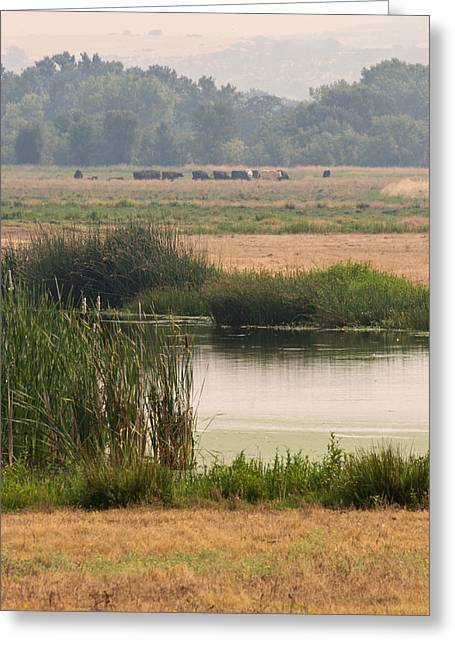 Smokey Pasture And Pond Greeting Card by Sarah Mueller