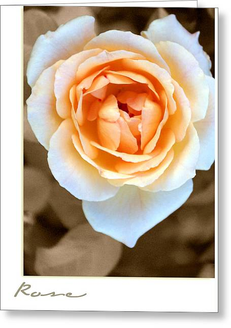 Smooth Angel Rose Greeting Card by Holly Kempe