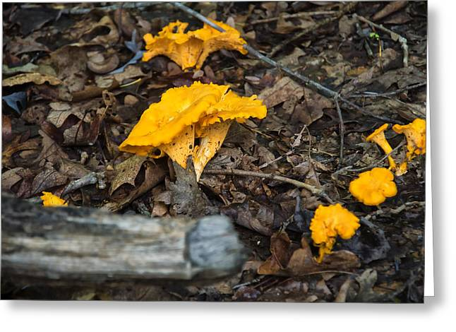 Smooth Chanterelle Greeting Card by Chris Flees